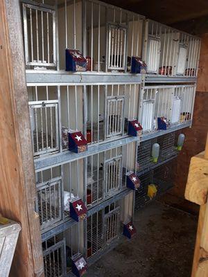 Todo con 18 palomas 500 for Sale in Miami, FL