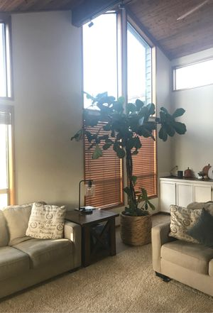 9ft fiddle leaf fig tree for Sale in Happy Valley, OR