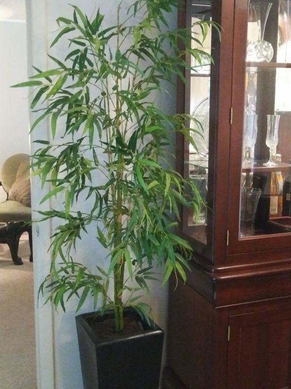 Bamboo and all types of artificial trees and plants.