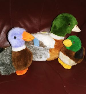 Duck Family for Sale in Laredo, TX