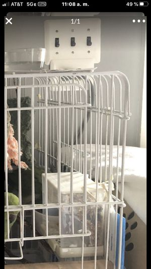 Bird cage plus two Quaker parrots for Sale in Falls Church, VA