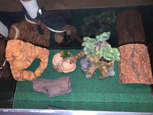 2 Leopard geckos with accessories for Sale in IN, US
