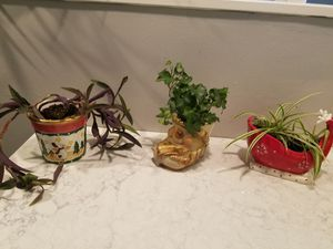 3 live plants in holiday pots $16 all for Sale in Levittown, PA