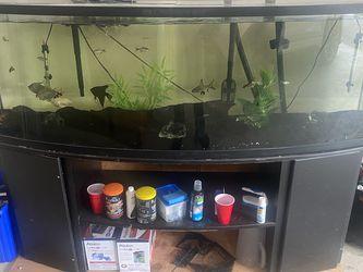 Aquarium for Sale in Puyallup,  WA