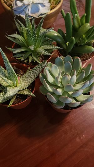 """Sacculent plants 5"""" for Sale in Adelphi, MD"""