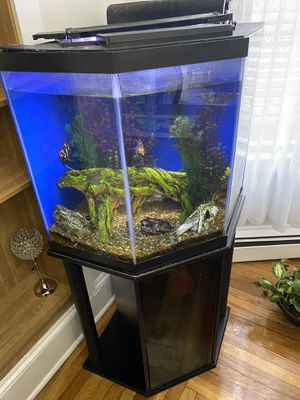 50 gallons fish tank, with filters and fishes for Sale in Salem, MA