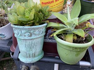Assorted plants for Sale in Cerritos, CA