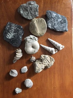 Nice Fossil Collection. for Sale in Baltimore, MD