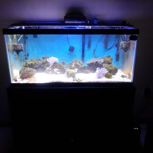 40 Gallon Breeder Saltwater Aquarium W/Stand, Lights for Sale in Southbridge, MA