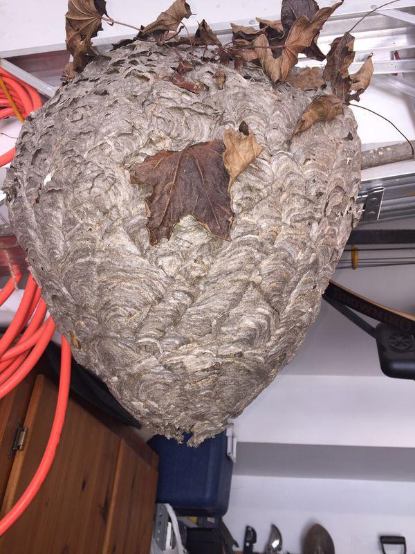 Hornets nest bee hive