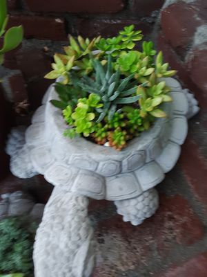 """18"""" cement turtle planters with succulent plants $21 each for Sale in Whittier, CA"""