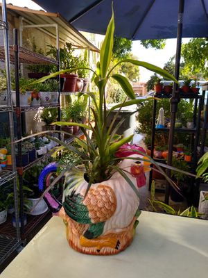 INDOOR PLANTS for Sale in Paramount, CA