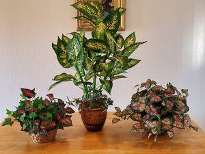 SILK PLANTS for Sale in Mesa, AZ