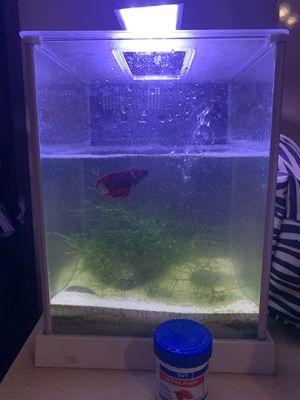 Betta fish tank & fish for Sale in San Diego, CA