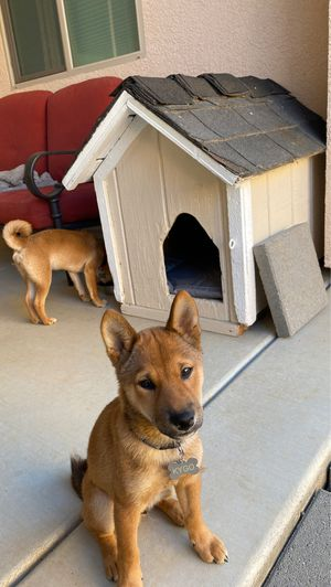 Dog house great condition for Sale in Elk Grove, CA