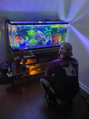55 gallo fish tank for Sale in Greenbelt, MD