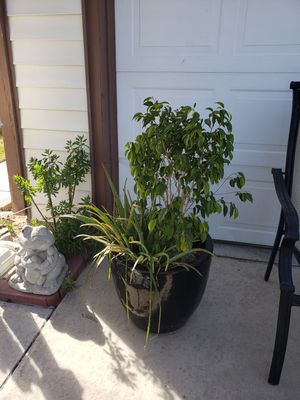 Plants in big pots for Sale in Las Vegas, NV