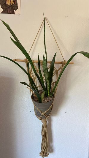 Wall Plant holder for Sale in Temecula, CA