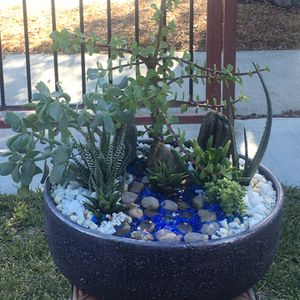 Large Rustic Clay Vase With Portulacaria Money Succulent Aloe Ripple & Beautiful Decoration for Sale in Fontana, CA