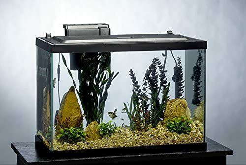 20 gallon aquarium full setup