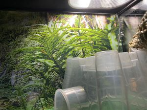 Nile tank reptile fish tank for Sale in Los Angeles, CA