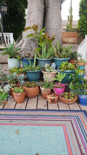 Flower pots, plants included for Sale in Chula Vista, CA