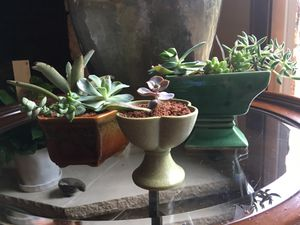 Set of GORGEOUS succulents for Sale in Austin, TX