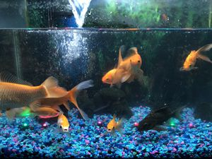 I have to sell my Beautiful aquarium for Sale in Hamtramck, MI