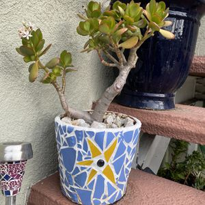 Vintage Mosaic Pot With Succulent And Pebble Base for Sale in Los Angeles, CA