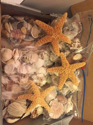 Seashells and Starfish for Sale in North Kingstown, RI