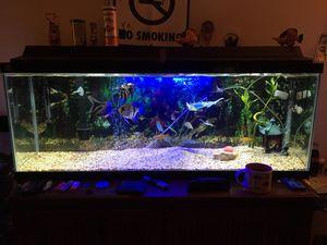 45 gallon fish tank for Sale in Annandale, VA
