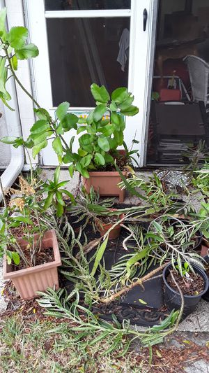 Assortment of plants for Sale in FL, US