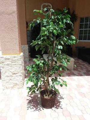 Artificial Tree for Sale in Pembroke Pines, FL