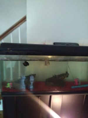 55 gallon fish tank for Sale in Rosedale, MD