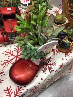 Christmas Succulent boot for Sale in Fresno, CA
