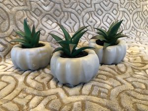 Succulent pumpkins (3) for Sale in Fontana, CA