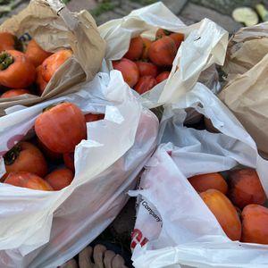 Large Hachiya Persimmons - Final Crop for Sale in Glendora, CA