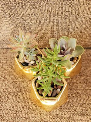 Succulents in gold pot for Sale in North Las Vegas, NV