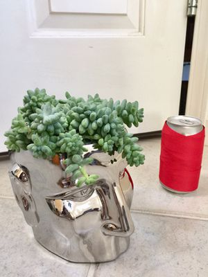 Real Indoor Houseplant - Donkey Tail Succulent Plants in Silver Head Ceramic Planter Pot for Sale in Auburn, WA