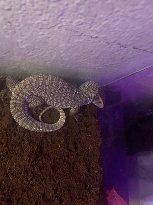 Reptile supplies for Sale in La Puente, CA