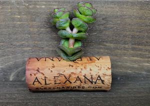 Wine Cork Succulent Magnets for Sale in San Diego, CA