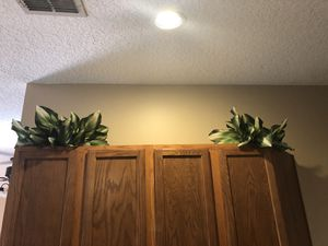 5 Bunches of Decorative Vegetative Bushes for Sale in Tampa, FL