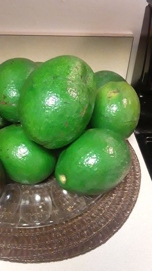Avocados 75 cent each for Sale in Homestead, FL
