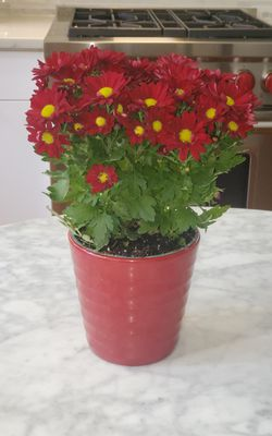 """Contemporary Flower Pot Modern Planter Horizontal Ridges Red 5.25"""" in diameter and 5"""" high for Sale in Washington,  DC"""