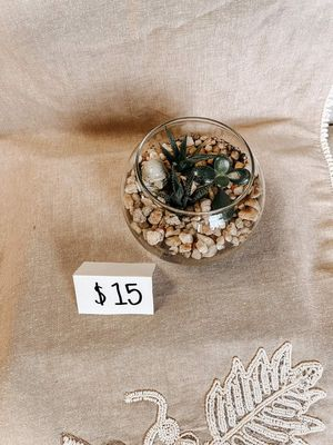Succulent plant bowls for Sale in Colora, MD