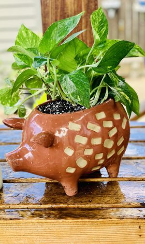 Live Indoor Golden Pothos house plant in a textured Pig 🐖 ceramic planter flower pot—firm price for Sale in Seattle, WA