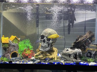 40 Gallon Fish Tank for Sale in Fort Worth,  TX