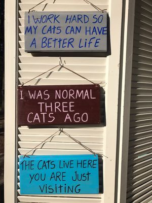 Funny cat signs/ hand made for Sale in Durham, NC