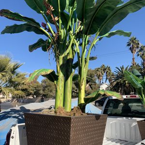 9 Ft Tall Prop Plant Excellent Condition With Big Vase (fake Plant ) for Sale in Las Vegas, NV