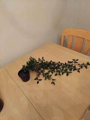 Fake plant for Sale in Wilmington, DE